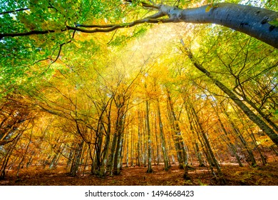 Amazing Autumn forest background - autumnal landscape with bright yellow leaves and trees in wild forest