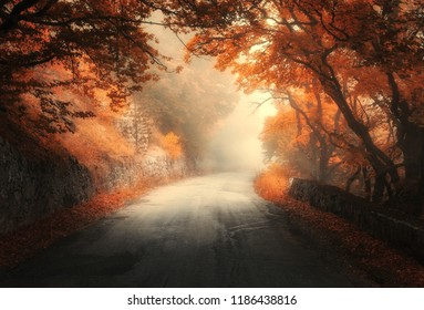 Amazing autumn forest with rural road in fog. Fall trees with orange foliage. Landscape with woods, mountain road, colorful leaves, and mist. Travel. Nature background. Magical foggy forest. Fairytale