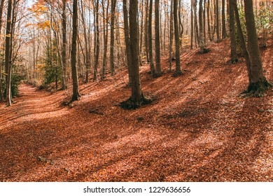 Amazing autumn landscape with beautiful colourfull forest in the mountains. Montseny, Catalunya