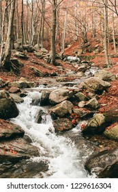 Amazing autumn landscape with forest and river. Beautiful colourfull place in the mountains