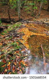 Amazing Autumn landscape. River in colorful autumn park with yellow, orange, red, green leaves. Golden colors in the mountain forest with a small stream. Season specific