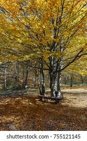 Amazing Autumn Landscape with yellow near Devil town in Radan Mountain, Serbia