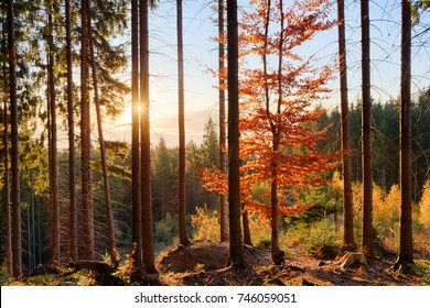 Amazing autumn morning in high mountains forest with sun rays shining through the trees