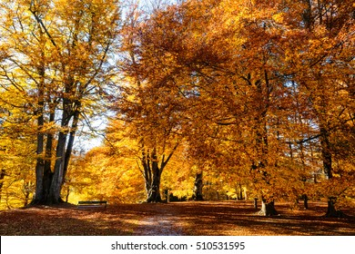 amazing autumn scenic fall forest wooden bench