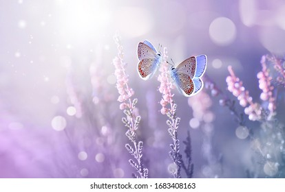 Amazing beautiful colorful natural scenery. Lavender flowers and two butterfly in rays of summer sunlight in spring outdoors on nature macro, soft focus. Atmospheric photo, gentle artistic image.