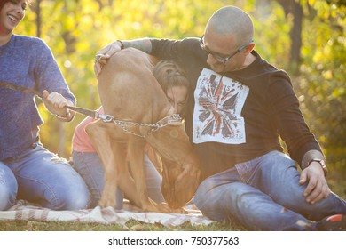 Amazing Beautiful gorgeous family of three playing in the park with their dog. Animal lovers. Mother, father, daughter and their dog