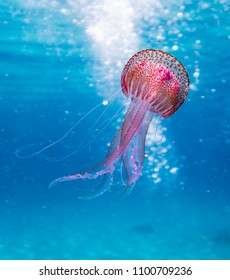 Amazing beautifull colorful jellyfish in the nature