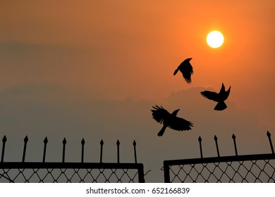 Amazing Birds flying towards the sun from fence gate, concept of bird flying in open sky for new life and freedom