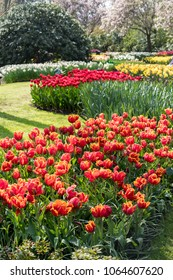 Amazing blooming flowers in Dutch garden in spring