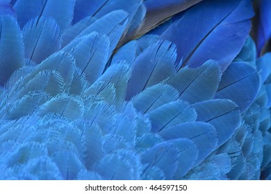 An amazing blue background of bird feathers, the fascinated Yellow and Blue macaw bird's wing texture