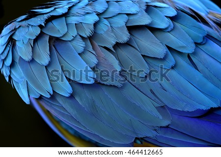 Amazing Blue Background Puffy Bird Feathers Stock Photo Edit Now