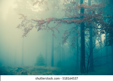 Amazing bluish foggy light in mystical autumn forest - trees and large branches with fall orange leaves against cold spooky woods background - Happy Halloween card landscape backdrop