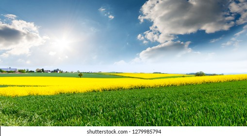 Amazing bright colorful spring and summer landscape for wallpaper. Yellow field of flowering rape and tree against a blue sky with clouds. Natural landscape background with copy space, Europe