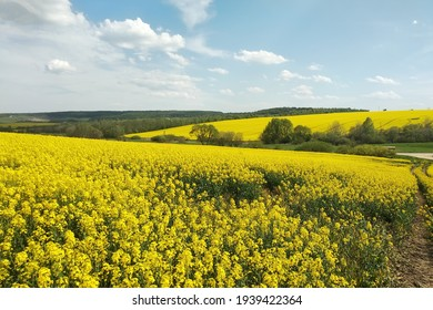 Amazing bright colorful spring and summer landscape for wallpaper. Yellow field of flowering rape and tree against a blue sky with clouds. Natural landscape background with copy space, Ukraine