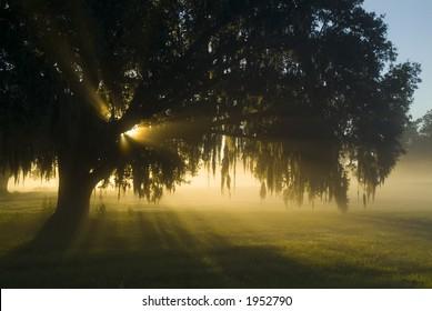 Amazing brilliant sun light in fog 18