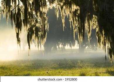 Amazing brilliant sun light in fog 26