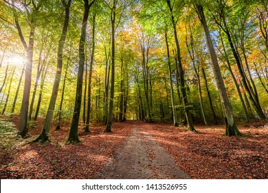 Amazing and brown forest in the autumn, Poland