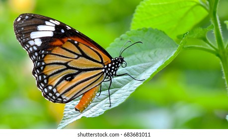 Amazing butterfly on green leaf