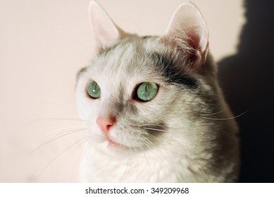 Amazing cat with green eyes