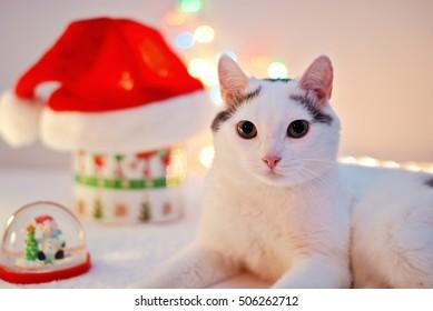 Amazing cat laying among Christmas decor