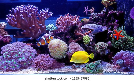 Amazing colorful saltwater coral reef aquarium