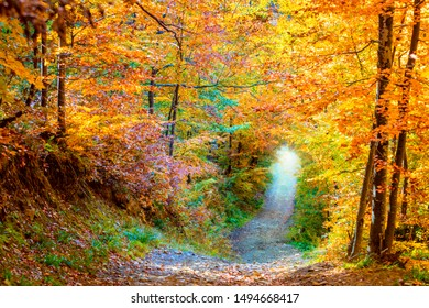 Amazing colors of Autunm - natural trees tunnel in autumnal forest. Beautiful fall season landscape
