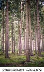 Amazing coniferous woods Brdy in Czech Republic.