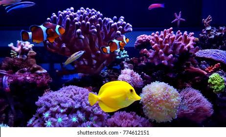 Amazing coral reef aquarium tank scene