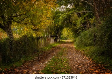 Amazing country path into the forest, Krinofyta, Kalavryta, Greece
