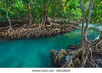 Amazing crystal clear emerald canal with mangrove forest , Krabi province, Thailand
