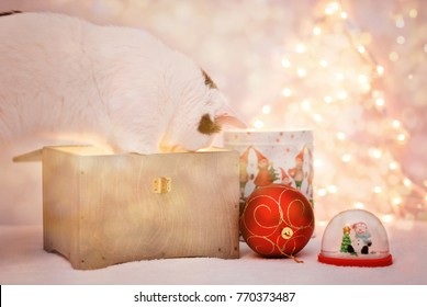 Amazing curious cat looking into dower chest with light inside