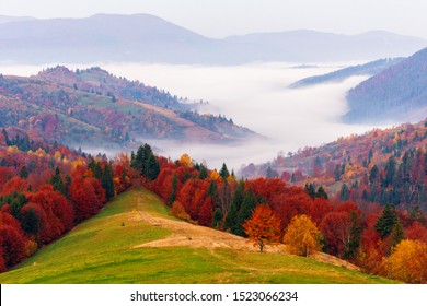 Amazing dawn autumn scenery with colorful trees on meadow, fog above valley and mountain ranges on background. National Natural Park Synevir, the Carpathian Mountains, Ukraine.