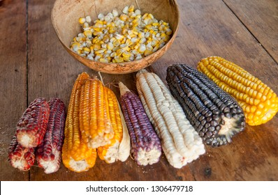 The amazing diversity of corn species is so colorful that i couldn't resist taking this photo in one of the smallest villages in Quintana Roo, where mayan agriculture is still in use.