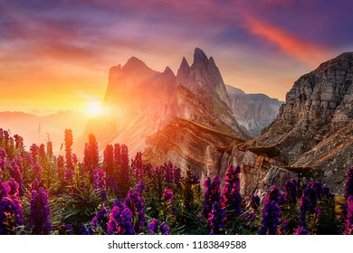 Amazing Dolomites Mountains Landscape with Flowers, under Sunlit. View of Seceda During Colorful Sunset. Picturesque Sky over the Odle Group Mountains. Wonderful picturesque Scene. Postcard