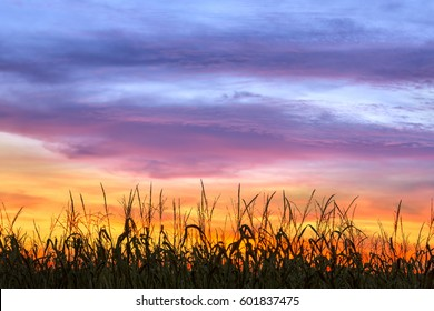 An amazing, dramatic, colorful sunset sky silhouettes cornstalks in an Indiana cornfield near harvest time.