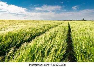 Amazing ears of grain on green field in sunny day
