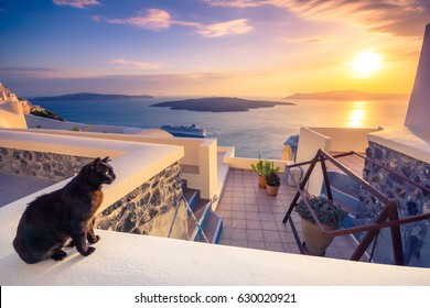 Amazing evening view of Fira, caldera, volcano of Santorini, Greece with cruise ships at sunset and a cute cat on the balcony. Cloudy dramatic sky.