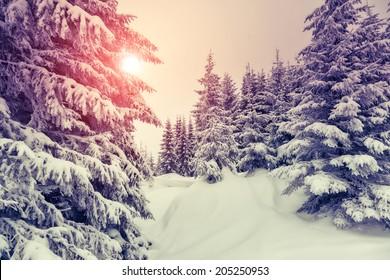 Amazing evening winter landscape. National Park. Carpathian, Ukraine, Europe. Beauty world. Retro style filter. Instagram toning effect. Happy New Year!