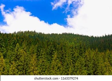 Amazing fabulous moutain forest with cloudy blue sky in Ukrainian Carpathians