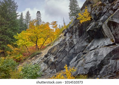 Amazing fall colors against the dark rock in the Icicle Canyon near Leavenworth Washington