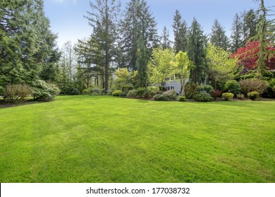 Amazing farm house backyard with green lawn, fir trees, bushes