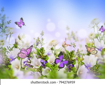 Amazing field bells and daisies, floral background with butterflies. Flowers in the wild.