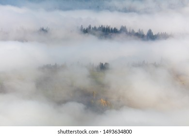 Amazing Fog in Mountains -  landscape with fir forest in Mountains valley, autumn season