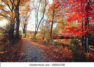 Amazing foliage upstate New York. Morning sunlight spills over the golden foliage. Windham NY is one of the most popular destination for scenic drives, bike trails, foliage and nature lovers.