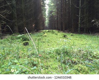 amazing forest view in Danmark