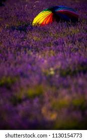 Amazing Fresh Lavender Fields