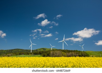 Amazing full-blown rape blossoms / Amazing full-blown rape blossoms and hills / We can see pasture land beyond rape field.