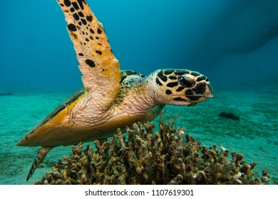 Amazing Giant Green Sea Turtles in the Red Sea, eilat israel - a.e