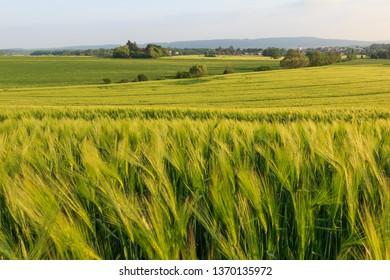 Amazing green grain fields during spring afternoon. Endless rural countryside, very peaceful, relaxing and calm. Perfect for afternoon walks, unwind and clear one's head from everyday stress.