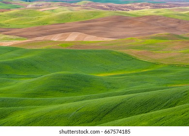 Amazing green hills. Plowed fields, an incredible drawing of the earth. Steptoe Butte State Park, Eastern Washington, in the northwest United States.